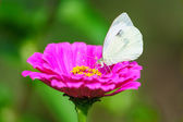 White butterfly from side on flower blossom — Stockfoto