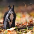 Squirrel standing on colorful leafs — Stock Photo #58373553