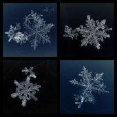 Conjunto de cuatro copos de nieve — Foto de Stock