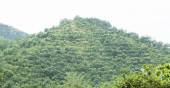 Mountain view of rubber trees — Stock Photo