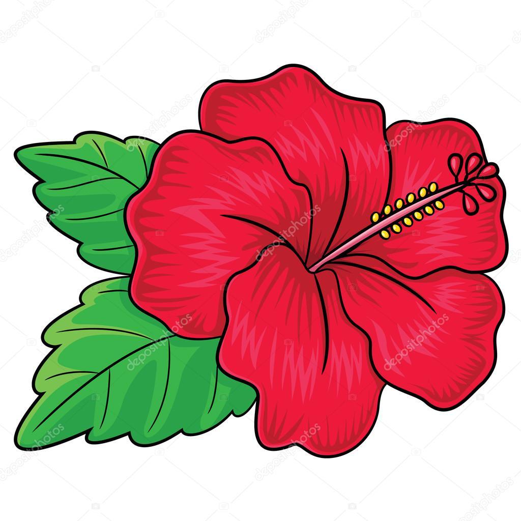 Flower Dibujo: Dibujos Animados De Flor De Hibiscus