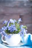 Forgetmenot цветы — Стоковое фото