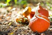 Autumn vegetable close-up — Stock Photo