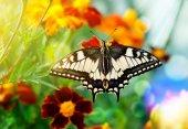 Heldere vlinder — Stockfoto