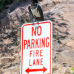 Large bird parking on sign — Stock Photo #57936015