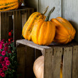Fall pumpkins and mums — Stock Photo #57936631