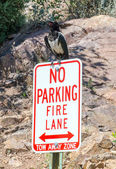 Large bird parking on sign — Stock Photo