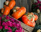 Fall gourds and mums — Fotografia Stock