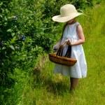 Little girl picking blueberries — Stock Photo #77560214