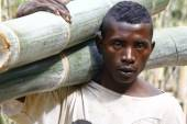 Hard working man carrying a tree trunk - MADAGASCAR — Stock Photo