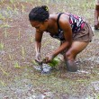 Woman planting rice into the paddy fields of Madagascar — Stock Photo #76213755