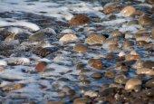 Sea swash — Stock Photo