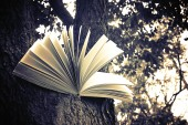 Diary on tree — Foto Stock