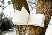 Diary on tree — Foto Stock