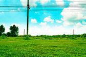 Gras achtergrond — Stockfoto