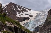 Mountain snow glacier flowers — Stock Photo