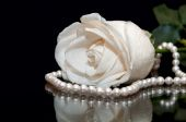 White Rose pearl black background — Stock Photo