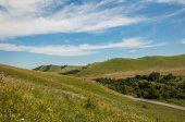 Summer green hilly landscape — Stock Photo