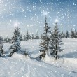 Spruce forest snow snowflakes stars — Stock Photo #60262773