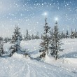 Spruce forest snow snowflakes stars — Stock Photo #60262805