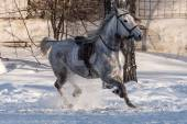 Horse training workout winter — Stock Photo