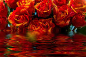 Red yellow roses water reflection  — Stock Photo