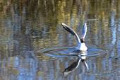 Seagull bird water — Stock Photo