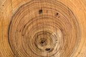 Wood trunk sawing texture — Stock Photo