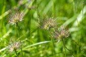 Flower meadow grass spring — Stock Photo