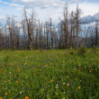 Flowers meadow mountains dry trees — Stock Photo #76326069