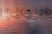Texture water sunset background — Stock Photo
