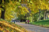 Autumn in the botanical garden — Zdjęcie stockowe