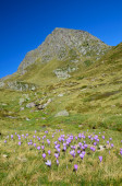 Flowering valley in the autumn Atlantic Pyrenees — Stock Photo