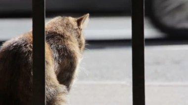 Cantiere gatti — Video Stock