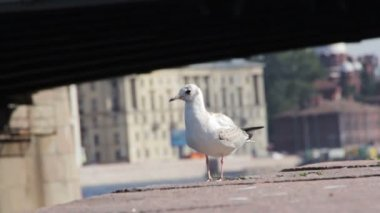 Gulls on the waterfront — Stock Video