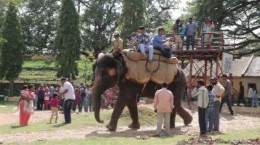 Tourists ride on an elephant and camel on a sunny day. Mysore. Karnataka. India. — Stock Video