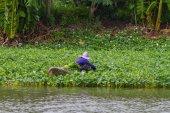 Farmer working in the morning glory farm — Stock Photo