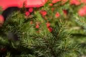 Christmas tree bokeh — Stock Photo