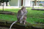 The family of monkeys chewing nuts in park — Stock Photo
