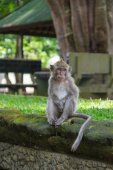 Monkey sitting on an ancient stone in park — Stock Photo