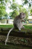 Monkey sitting on a stone in forest park — Stock Photo