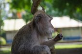 The monkey eats a nut in forest park — Stock Photo