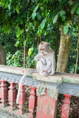 The sad monkey sitting on a fence in park — Stock Photo