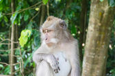 Sad monkey in forest park close up — Stock Photo