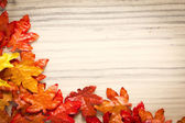Foliage, autumn leaves — Stock Photo