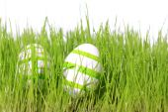 Easter eggs green — Stock Photo