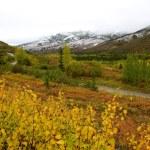 färgstarka landskap i kantishna under hösten — Stockfoto #54739557