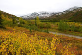 Colourful landscape in Kantishna during fall — Stock Photo