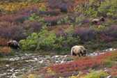 Three brown bears — Stock Photo