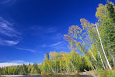 Trees on riverbank of Chena river — Stock Photo